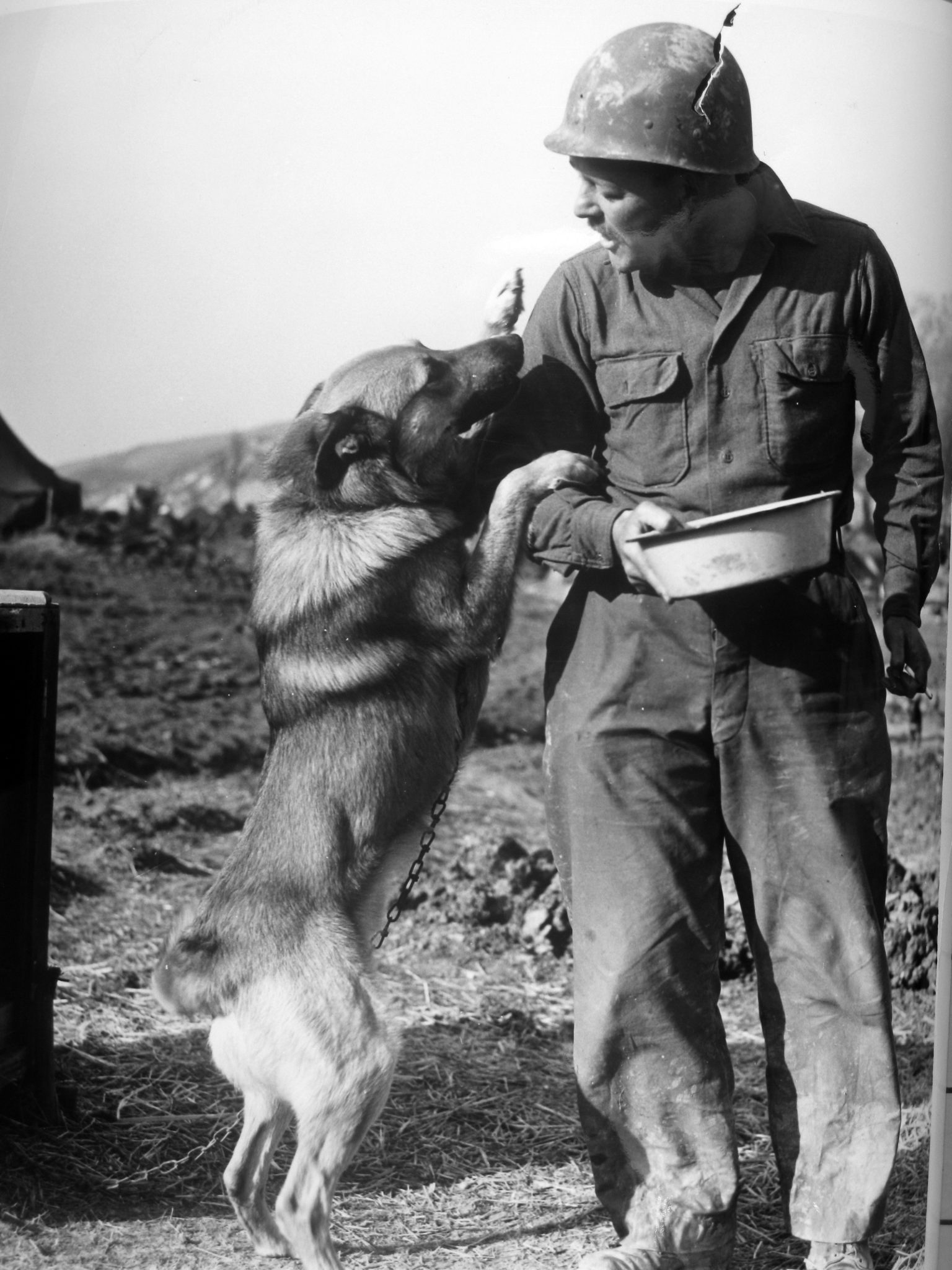 The Dogs Of War The Us Armys Use Of Canines In Wwii The