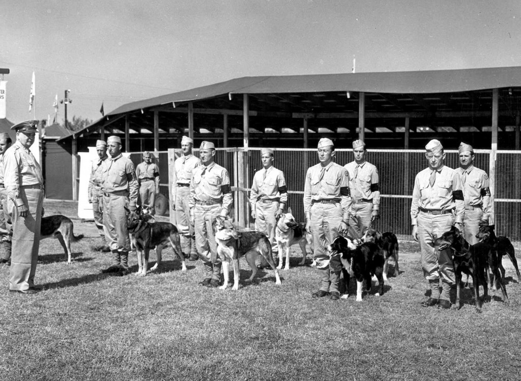 The Dogs Of War The U S Army S Use Of Canines In Wwii